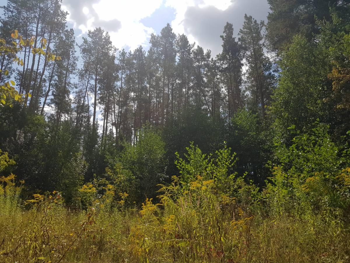 Продам 10,5 сот земельный участок 1-я сосны с. Ходосовка 3 км Лесники