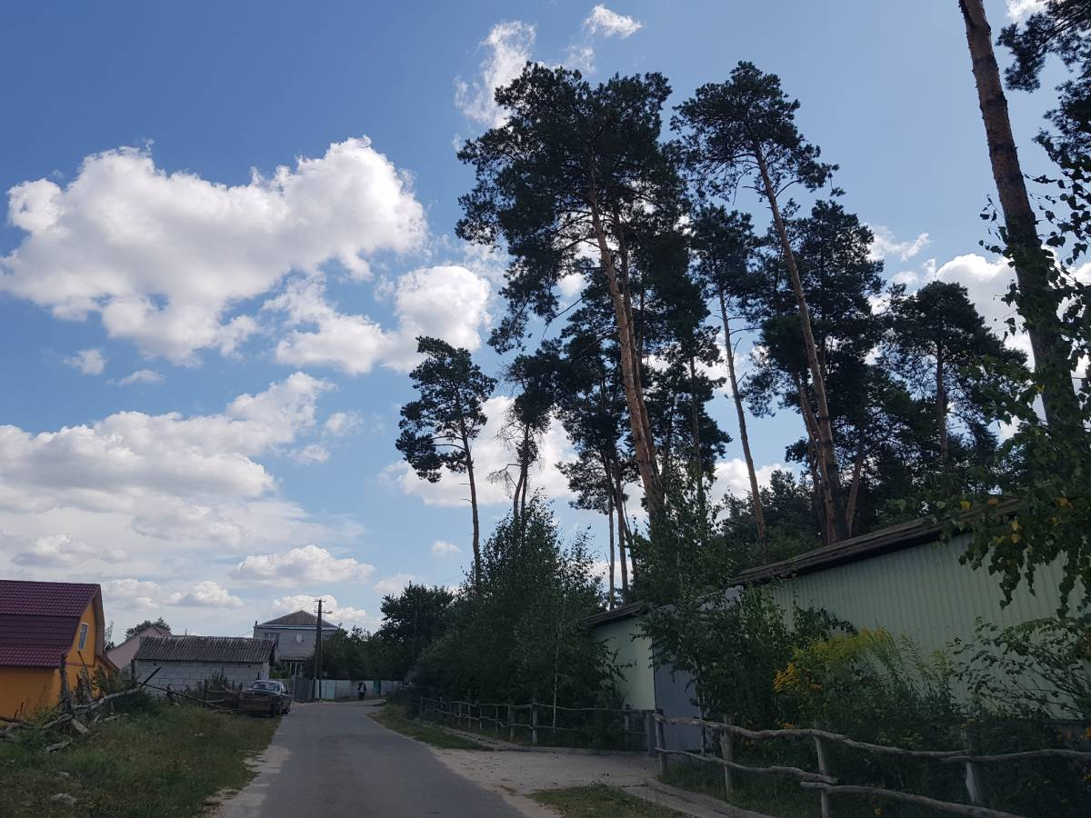 Продам в соснах 10-30 соток земельный участок с. Ходосовка 3 км Лесники