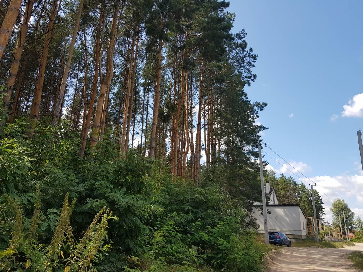 Продам в соснах 20 соток земельный участок с. Ходосовка 3 км Лесники