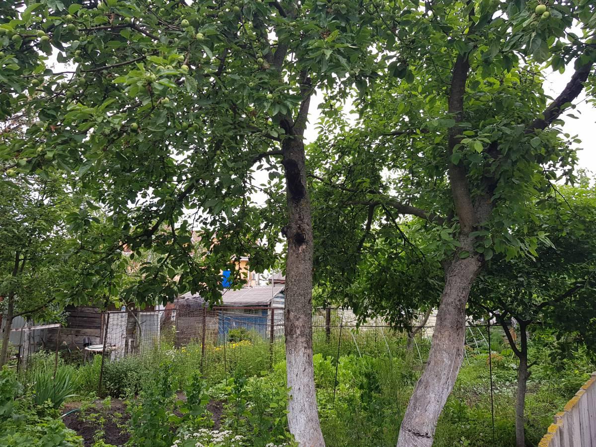 Продам 5.5 соток земли г. Киев Голосеевский р-н Чапаевка ул. Лютнева