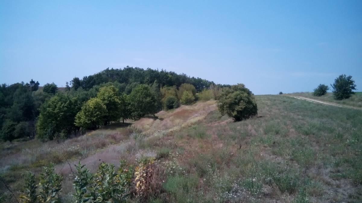 Продам 17 га земли с. Ходосовка рядом Лесники кот гор Маеток Иванковичи