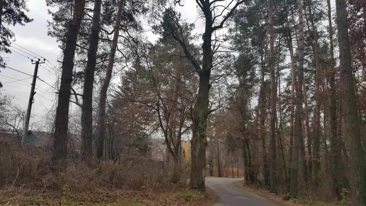 Продам 9 11 22 31 сотка земли в лесу с. Круглик по док Вита-Почтовая