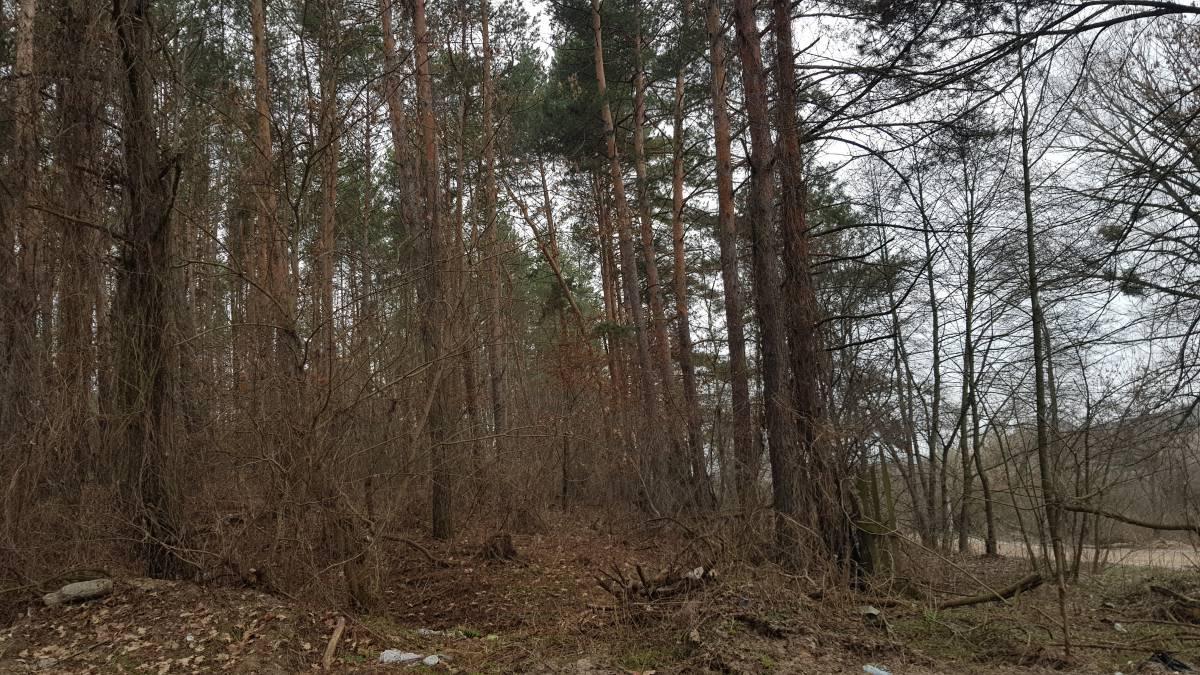 Продам 10,5 сот земли в лесу 47 м фасад с. Ходосовка ( Лесники Козин )